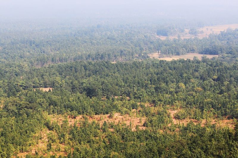 Jungle from Bird's View Jungle Trees Tree_collection  Landscape Jungle Landscape Hill And Jungle Birds Eye View Jungleland JungleExperience Open Space Full Of Trees Hills And Valleys Nature Outdoors Cultivated Land Be. Ready.