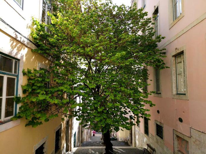 Tree City Low
