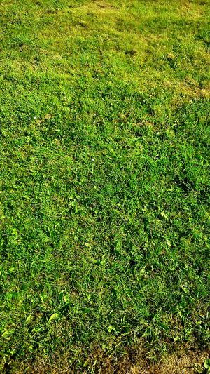 Green Grass Green Grass Natural Textures And Surfaces Pitch Field