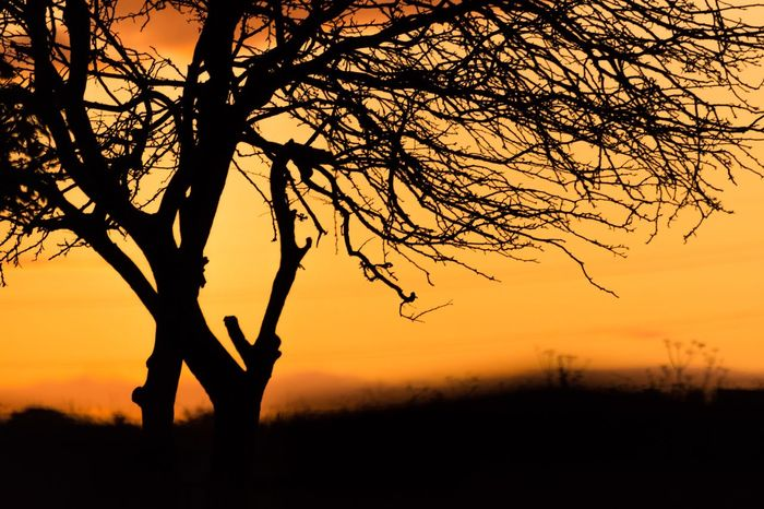 Silhouette Sunset Tree Orange Color Nature Real People Branch Beauty In Nature Tree Trunk Leisure Activity Tranquil Scene Outdoors Bare Tree Scenics Northeast United Kingdom EyeEm Nature Lover Nikonphotography EyeEm Gallery Nikon