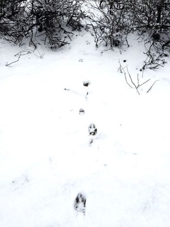 Mister Fox In The City Winter Snow Paw Print