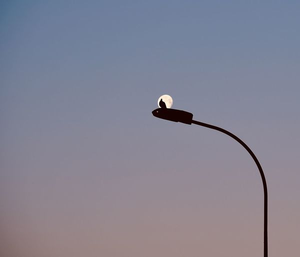 Low angle view of bird perching on street light