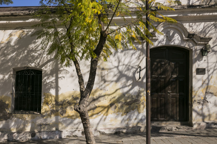Architecture Building Exterior Colonial No People Old Old Buildings Outdoors Sunlight Tree Tree Trunk