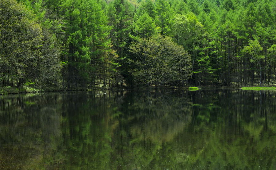 Peaceful green... amazing reflection Green Greencolor Greenleaves Japan Mishakaike Nature Nature_collection Pond Reflection Reflection_collection Spring 反射 御射鹿池 新緑 緑