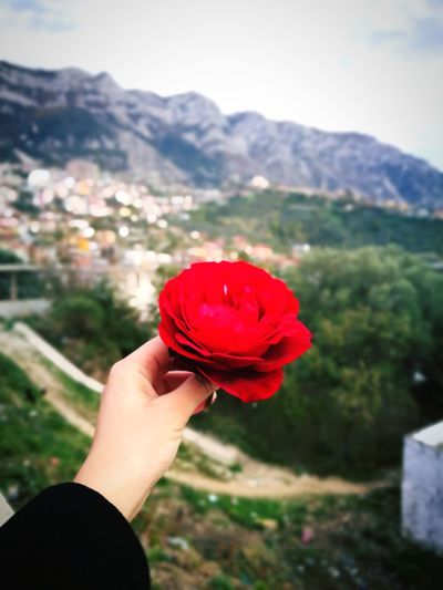 Mountain Red Nature Flower Rose♥ Kruje, Albania Beauty Beautiful Day Shqiperia Sky