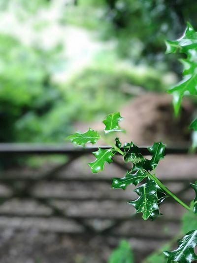 Leaf Growth Focus On Foreground No People Close-up Beauty In Nature Freshness Green Color Tree Nature Day Outdoors Summer Exploratorium The Still Life Photographer - 2018 EyeEm Awards