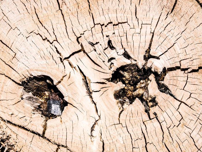 Full frame shot of broken tree trunk