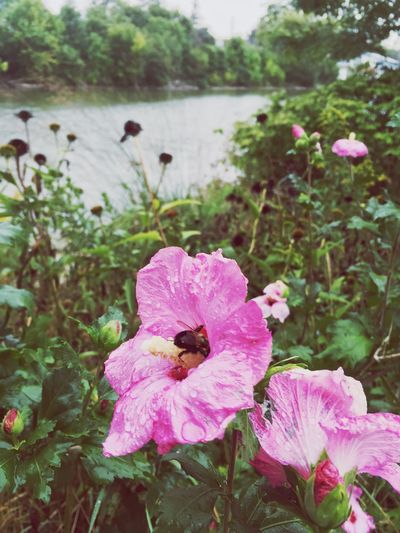 Rainy Day Flowers by the River