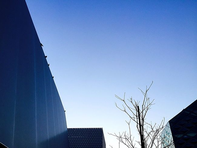 Life is hopeful. Prada Miumiu Stellamccartney Streetphotography Cityscapes Good Morning Sky Birds Before Sunrise Eye4photography  From My Point Of View Taking Photos Enjoying Life IPhoneography EyeEm Nature Lover Nature Early Bird