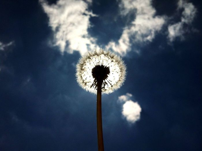 Taking Photos Hanging Out Check This Out Dandelion Dandelion Seeds Dandelion Collection Clouds Sky And Clouds Sky_collection Blue White Light Nature Enjoying Life EyeEn Nature Lover Eyeem Collection IPhoneography Iphonephotography Focused Eyeemphotography Photos With Words Maximum Closeness Focus Object Who What Where The City Light The Photojournalist - 2017 EyeEm Awards BYOPaper! Live For The Story