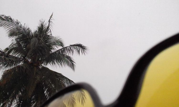 It's Raining Coconut Trees Specticals No People Indoors  Outdoors Tree Day Close-up Taking Photo From My Car
