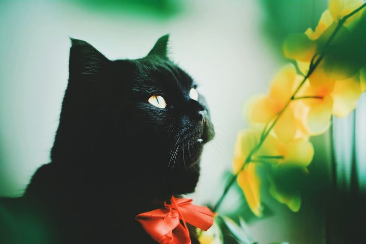 Childhood Domestic Cat One Animal Pets Green Color No People Domestic Animals Indoors  Feline Animal Themes Nature Close-up Mammal Day
