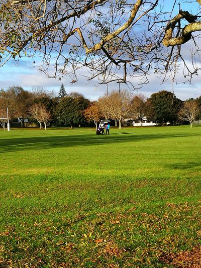 AorerePark Southauckland Nature Beauty In Nature Green Color Field Sport Familygathering BlessedBeyondMeasure Tree Grass Outdoors Sky
