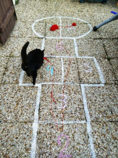 Hopscotch Pets Playing Chalk Drawing Domestic Cat Cat Feline At Home Kitten Drawn Drawing - Activity