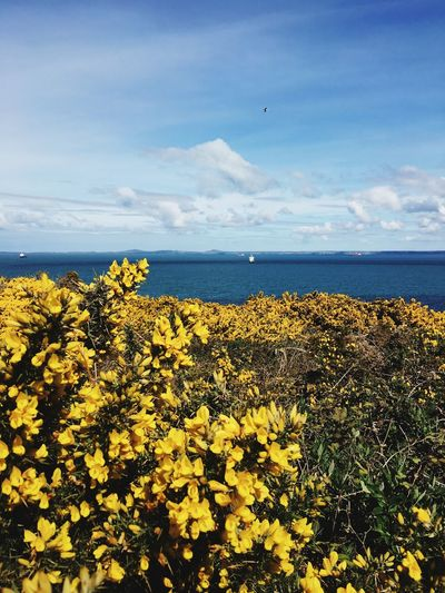 View of yellow flowers in sea against cloudy sky