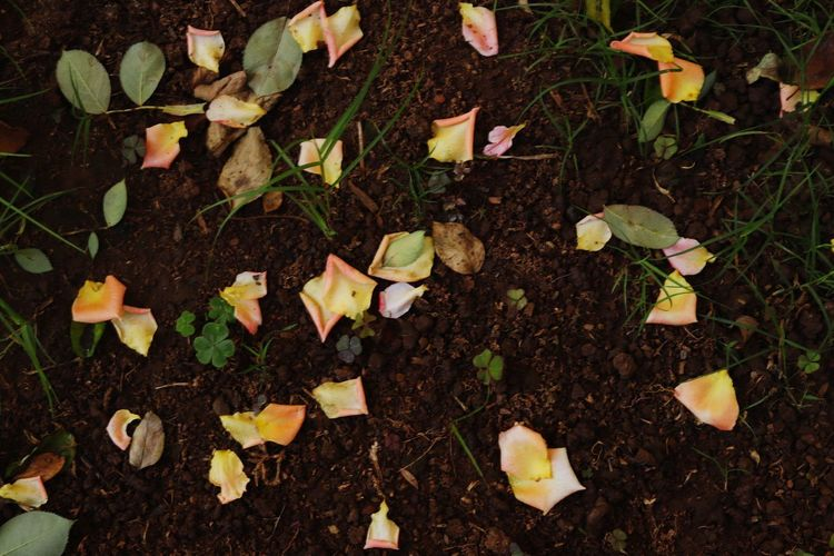 Petals on the