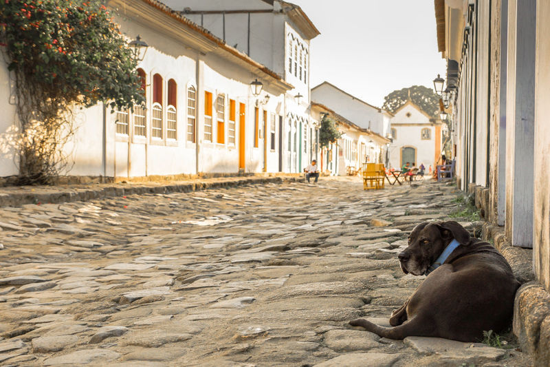 sometimes I want to be a dog... Animal Themes Architecture Chilling Cobblestone Day Dog Easy Living EyeEm Best Shots Outdoors Pets Siesta Travel Destinations Travel Photography Village