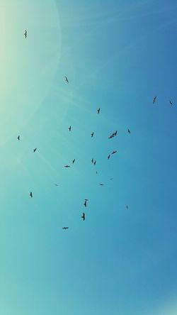 las gaviotas Formation Flying