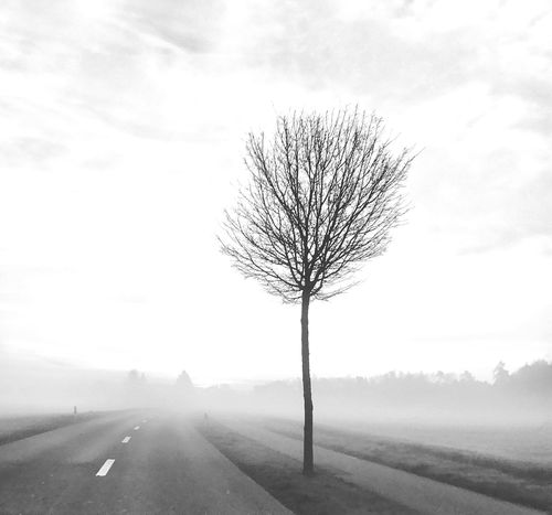 Bare Tree Nature Road Tree Sky Beauty In Nature Tranquility Tranquil Scene Outdoors Lone Day No People Remote Landscape Scenics The Way Forward Isolated
