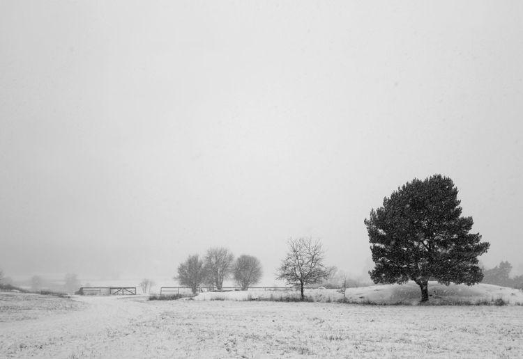 Snow Field Tree