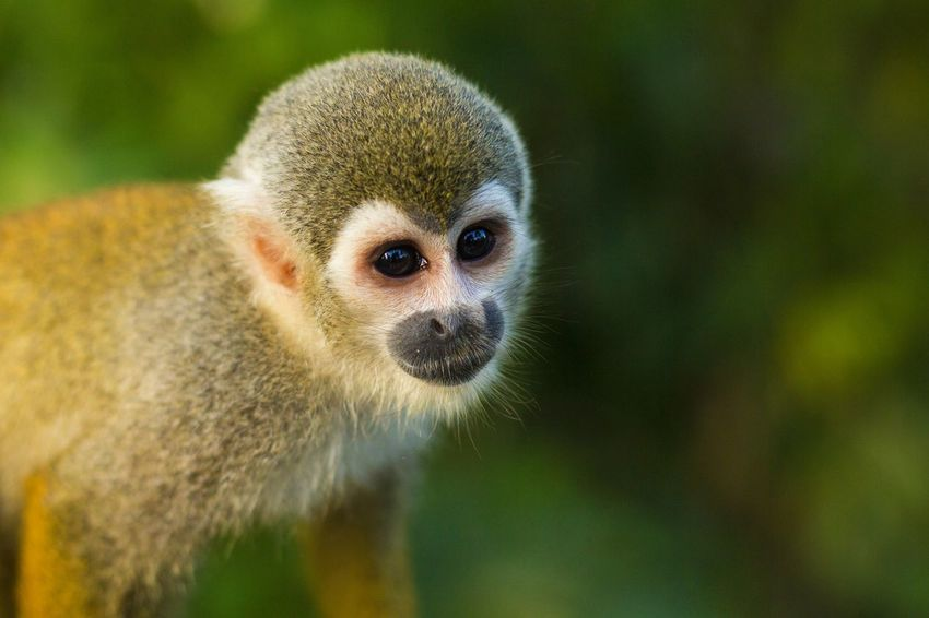 Monkey Nature Amazonas Amazon Amazon River Colombia Animal Cute Naturelovers