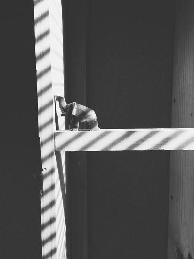 Stone Elephant Sum Streaks Shadows Stripes Everywhere Wood Black & White Alone :( Lonley