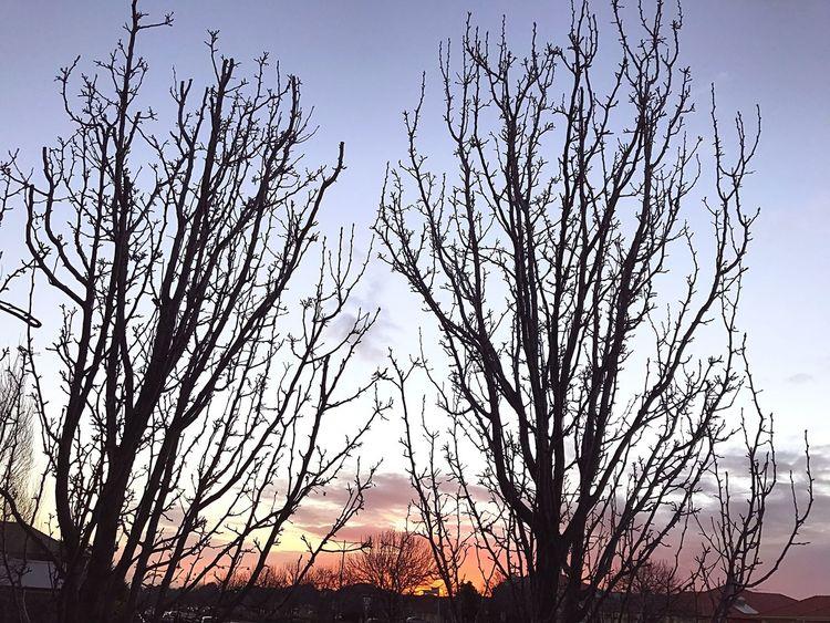 Enjoying Life EyeEm Gallery Eye4photography  Sunlight Sunset Bare Tree Silhouette Beauty In Nature Outdoors Sky Branch Landscape EyeEm Nature Lover
