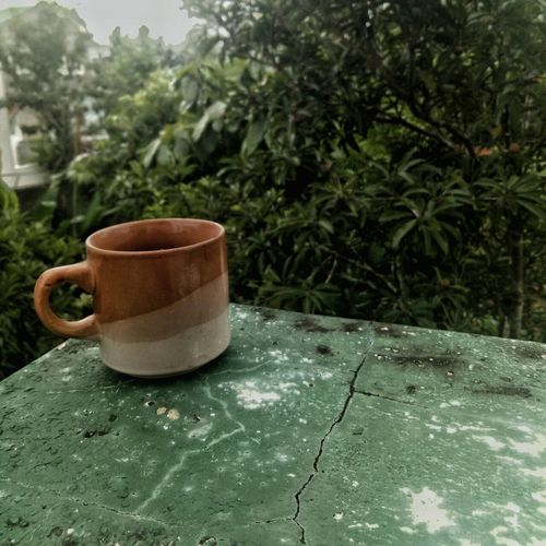 Green Color Drink No People Food And Drink Tea - Hot Drink Day Plant Tree Outdoors Freshness Close-up Nature Tree Beauty In Nature Naturephotography Coffee EyeEmNewHere