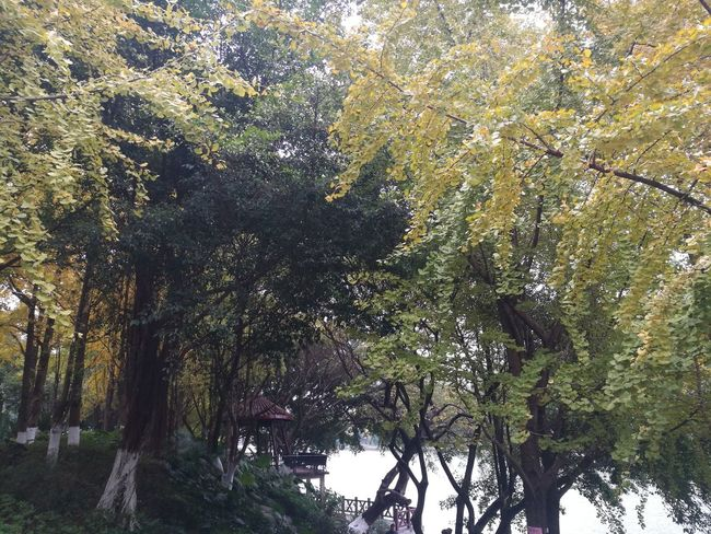 Fall in southern China Nature Tree No People Outdoors Beauty In Nature Day Original Photo