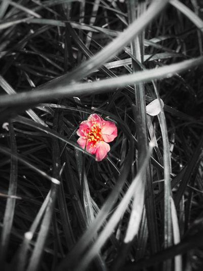 落花不是无情物,化作春泥更护花😁