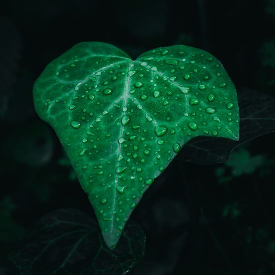 Close-Up Of Raindrops On Leaf At Night