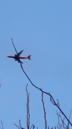 AirPlane ✈ Speedy Caught In The Moment Tree Branches Spear The Plane Branches And Sky Blue Sky
