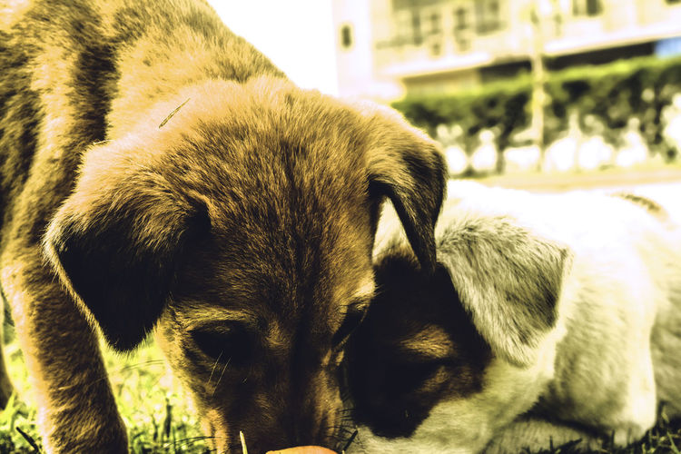 Animal Dogs