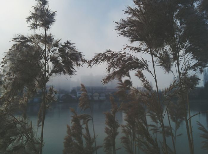 urban forgiveness Beauty In Nature Fog Smog Nature Nature Vs Pollutants Winter Blues Stillness In Time Winter Day Perspectives And Dimensions Silent Moment Tranquility Urban Background Reed Reeds At The Lake Lake View Vienna Is Different