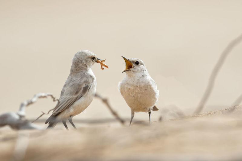 Birds perching on a bird