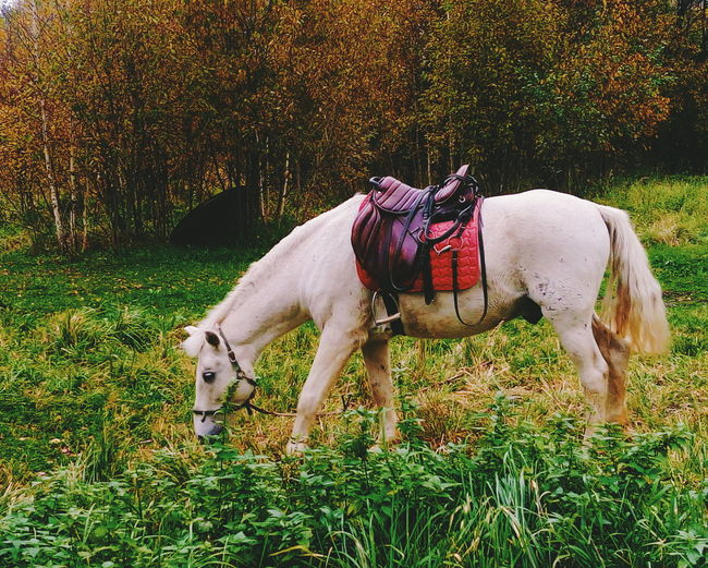 Horse standing in park during autumn