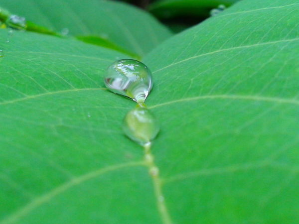 Colour Of Life Color Palette Leaf Green Leaves Rain Drops Rain Drops On Leaves Colourfull Popular Nature Green Color Closeupshot No Edit No Filter Two Is Better Than One The Magic Mission