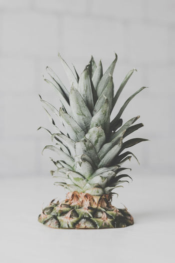 Pineapple Healthy Eating Indoors  Food And Drink Green Color No People Tropical Fruit White Background Food Studio Shot Wellbeing Still Life Fruit Close-up Plant Part Freshness Plant Leaf Table Nature