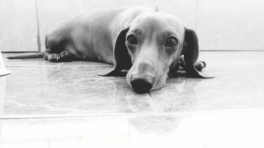 Peppa Dog