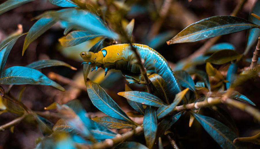 Leaf-eating worm