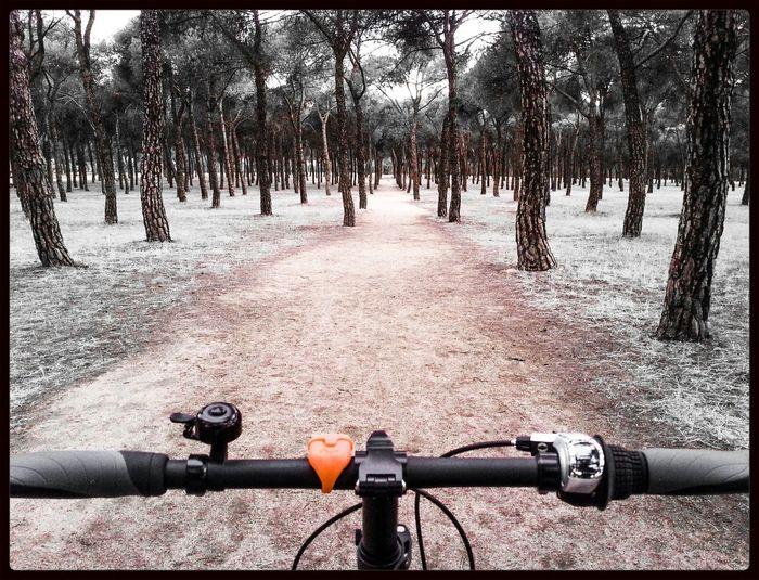 Bike Giant Madrid Vivesano