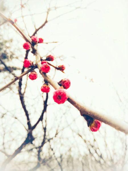 中国东北的初春