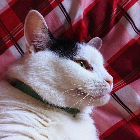 Ilovemycat Feline Catface Kitty Love Artistscats Ink361 Cat Pets IPadography Ipad