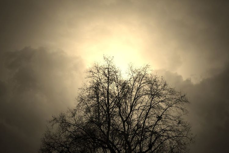 EyeEm Best Shots EyeEm EyeEm Best Pics Eye4photography  Close-up EyeEm Best Edits Edit Edited My Way From My Point Of View Silhouette Tree Sky Beauty In Nature Nature Bare Tree Low Angle View Tranquil Scene Treetop Outdoors Branch Cloud - Sky Sepia Sepia_collection Sepiatone Sepia Toned