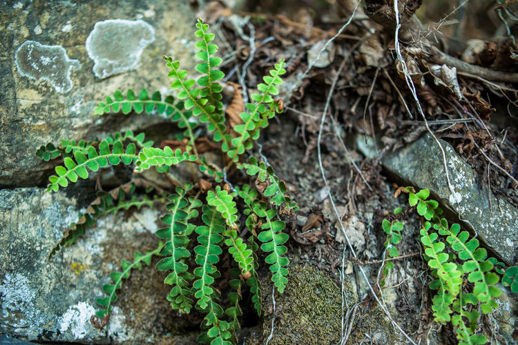 Dry Leaves Lichen Portofino Natural Regional Park Portofino Promontory Rock Rock Formation Beauty In Nature Close-up Day Fern Forest Fragility Green Color Growth Leaf Liguria Nature No People Outdoors Plant Stone Woods
