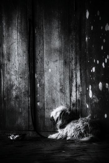 lonely dog waitting to be free Light And Shadow Black And White Dirty Dog Detainee Freedom Hope Waiting For You Light - Natural Phenomenon Wood Wall Chain EyeEm Best Shots - Black + White