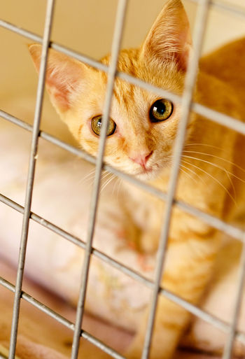 High angle view of cat in cage