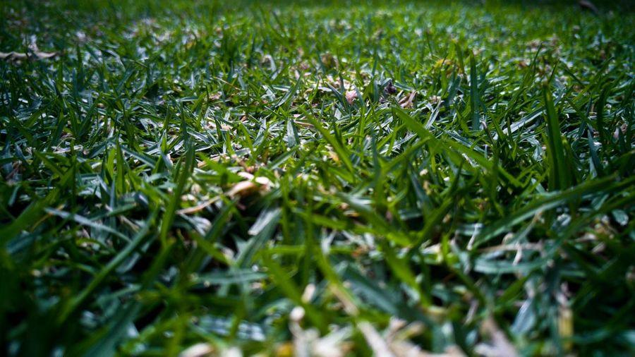 Grass Depth Of