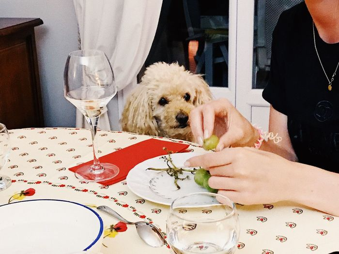 Midsection of woman with dog sitting on table