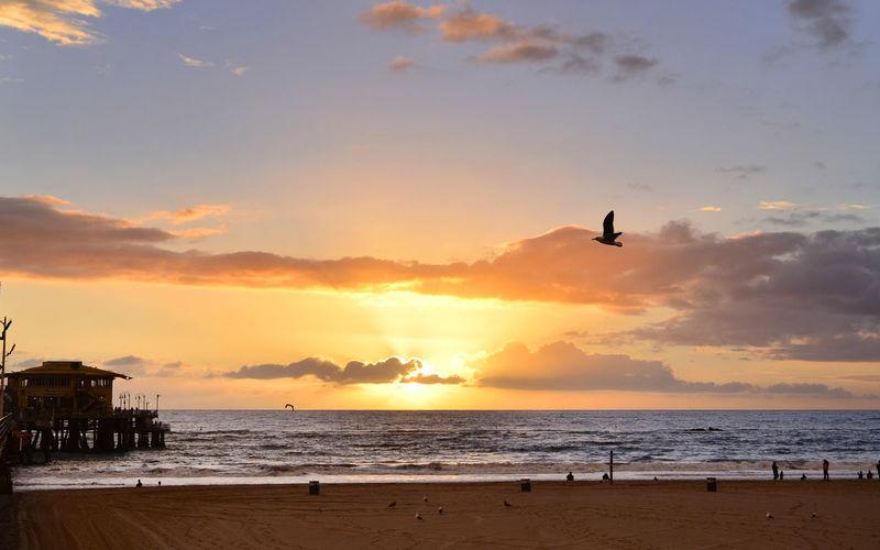 Silhouette Bird Flying Over Beach Against Sky During Sunset